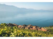 Das typische Weindorf St-Saphorin mitten im Lavaux mit dem Genfersee