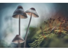 © Matti Virtanen, Finland, Winner, Mushroom, National Award, 2017 Sony World Photography Awards