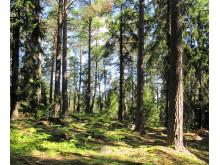 Natur på recept - Bengt Rundqvist från Stockholms läns hembygdsförbund ger sina bästa tips för hur du kan hämta kraft i naturen