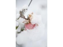 Vinter i Slottsträdgården