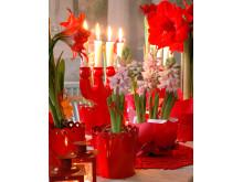 Hyacint - en av de sju som ger en fröjdefull jul