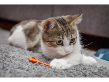 Helmi-kissa tuli Rekku Rescuelle kotihoitoon joulukuussa.