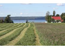 Lantbruk och trädgårdsnäring är avgörande för samhället.