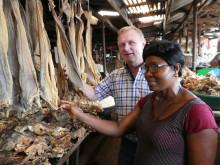 Jon Edvard Johansen inspiserer norsk tørrfisk på marked i Lagos