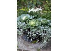 Recept på en lyckad plantering augusti-september