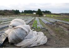 Landbruksplast