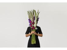 fång_by_interflora_gladiolus
