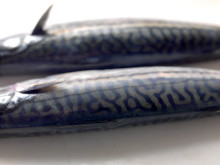 Mackerel from Norway