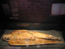 TING: Hva kan vi lære av en mumie?