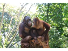 Singapore Zoo (Photo - Singapore Tourism Board)