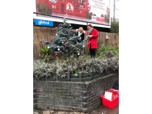 Living Christmas trees at Cricklewood