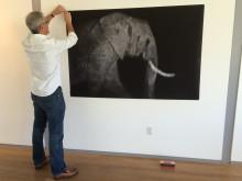 Frank af Petersens hänger utställningen The Poaching Wars