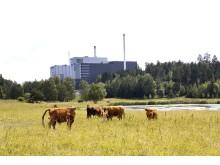 Brista kraftverk! Foto: Hans Ekenstang