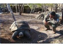 Pepe the turtle