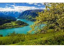 Für Olav H. Hauge, dessen Heimatort am Hardangerfjord liegt, war die Natur Westnorwegens eine wichtige Inspirationsquelle.