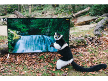Sony4K_Lemur_ _Zoo5b