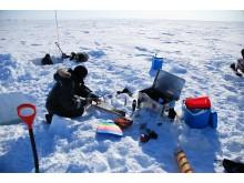 Prøvetaking av isalger på Grønland