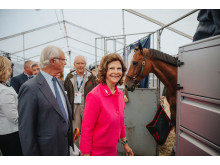 Royal Visit in the stables
