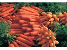 BASF förvärvar Bayers verksamhet för grönsaksutsäde