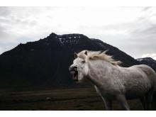 Norsk dokumentarfotografi: Tommy Elllingsen