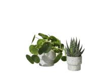 Interflora Kollektion Vår 2019 - Zoe kruka med Elefantöra och Aloe Tiki Tahi
