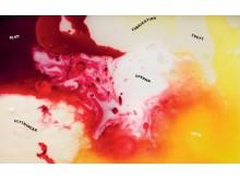 Kroppsvätskornas topografi. Bild Daniel Fagerström