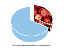 Var tredje tugga vi äter är, direkt eller indirekt, beroende av pollinering.