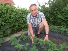 Magnus Engstedt har koll på plockningsläget av jordgubbar i landet.