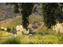 Matetic vingård