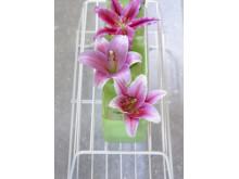 Liljor Oriental 'El Santo' Longiflorum 'Pink Heaven' 'Tiber'