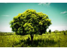 Träd i Vi-skogen