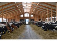 Mjölkproduktion