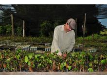 #KickItToBrazil Peugeots kampanj planterar träd i Amazonas