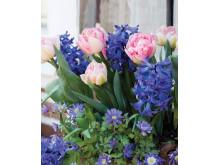 Romantic Garden – Lovely Match