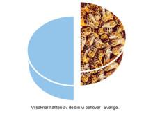 Sverige saknar hälften av de bin som behövs för att pollinera våra grödor och vår natur.
