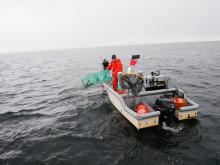 Fiske med torskbur