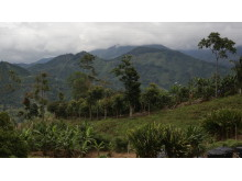 Nespresso_Rainforest Alliance 2