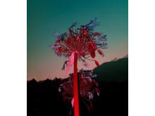 © Maela Ohana, Canada, 3rd Place, Professional competition, Wildlife , 2019 Sony World Photography Awards (2)