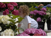 Forever&Ever - trädgårdsinspiration