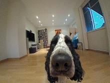 Hund SmartKamera.JPG