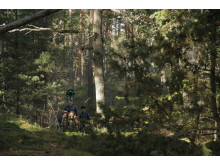 The Guides and Scouts of Sweden share their hikes on Google Street View, we call it Scout Trails