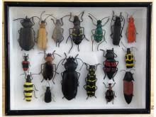 Sam Stigsson – Skalbaggar