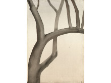 Tree(Walnut)_2002_Akvarell_©MatsGustafson