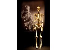 Skelettet - din inre ram