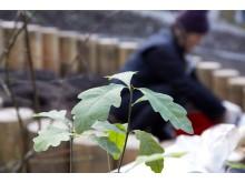 Plantering Solberga