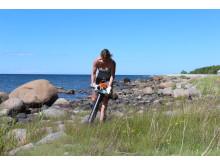 Insamling av leddjur på Öland med hjälp av omgjord lövsug.