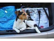 Hund_bil