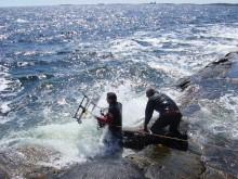 Klimaendringer kan føre til overgjødslingstrøbbel i Skagerraks økosystemer