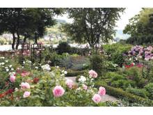 obelsik I i din trädgård ger struktur och skönhet