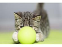 Kattunge med boll